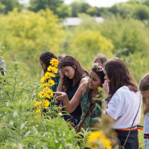 Event Image - Confluence Park Sunflowers